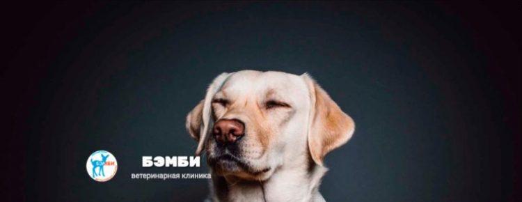 Ветклиника «Бэмби», Москва — отзывы