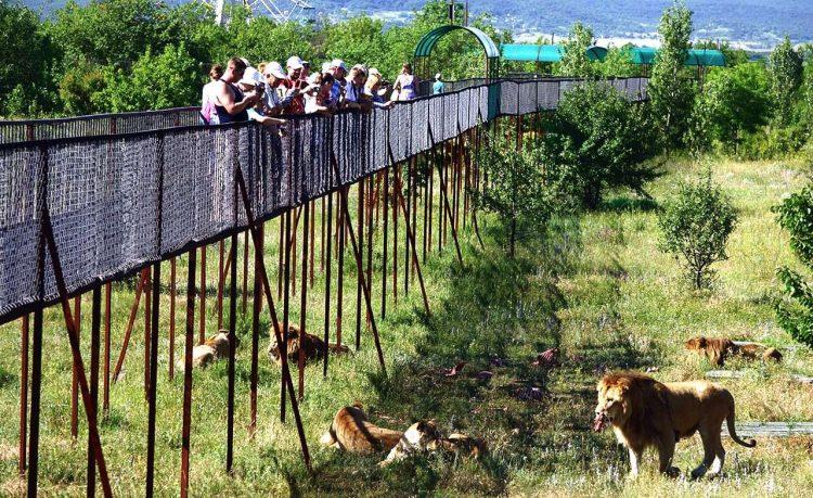Парк Львов «Тайган» — отзывы