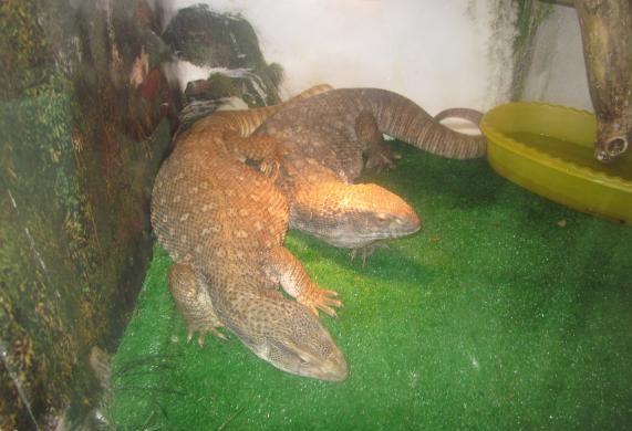 Крокодиловая ферма на Гребенской №4 — отзывы