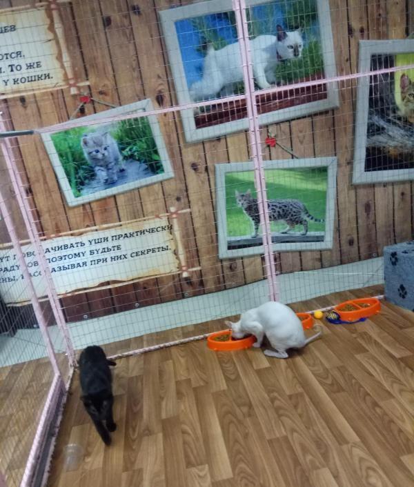 Выставка «Федерация кошек» — отзывы