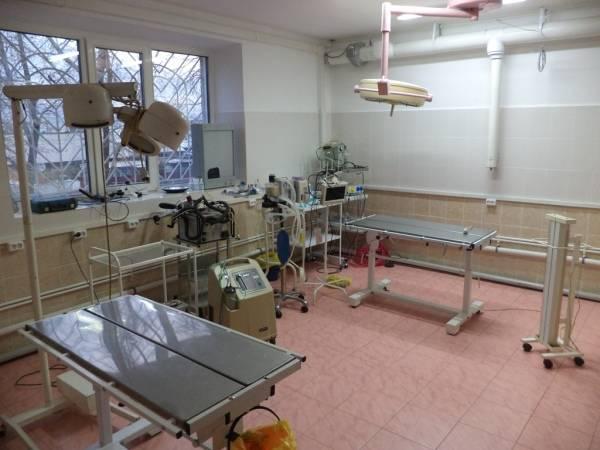 Ветеринарная клиника «Айболит» (Россия, Улан-Удэ) — отзывы