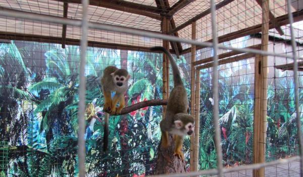 Туннельный океанариум и зоопарк «Мадагаскар»  — отзывы