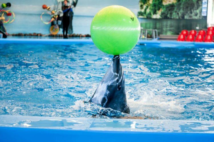 Дельфинарий «Немо» — отзывы