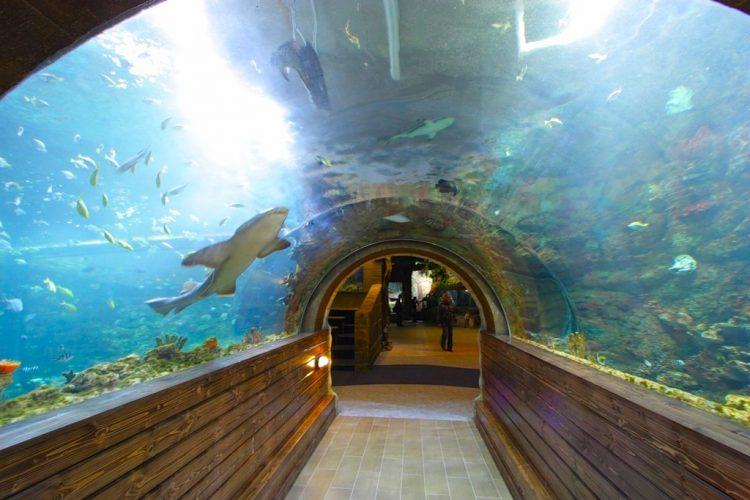 Воронежский океанариум — отзывы