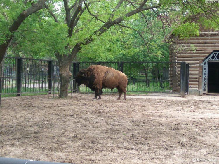 Николаевский зоопарк — отзывы