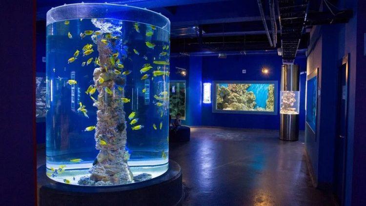 Океанариум «Нептун» — отзывы