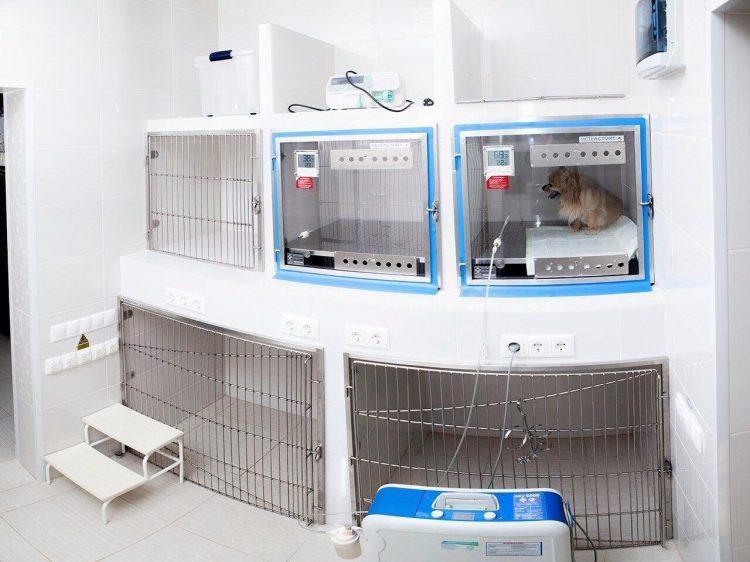 Ветеринарная клиника «Беладонна» (Россия, Москва) — отзывы