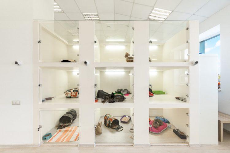 Гостиница для кошек Lapki Rooms (Россия, Москва) — отзывы
