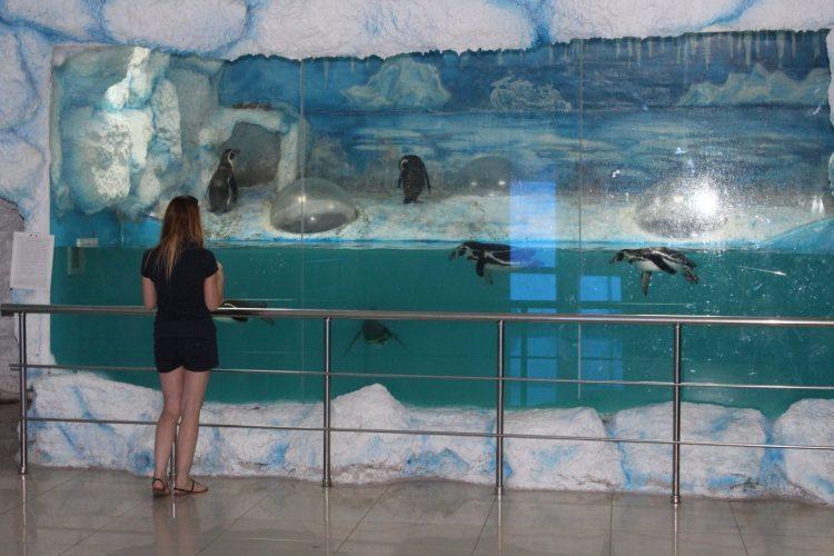 Пингвинарий (Россия, Джубга) — отзывы