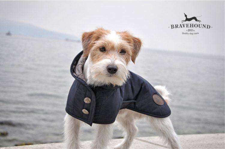 Одежда для собак Bravehound — отзывы