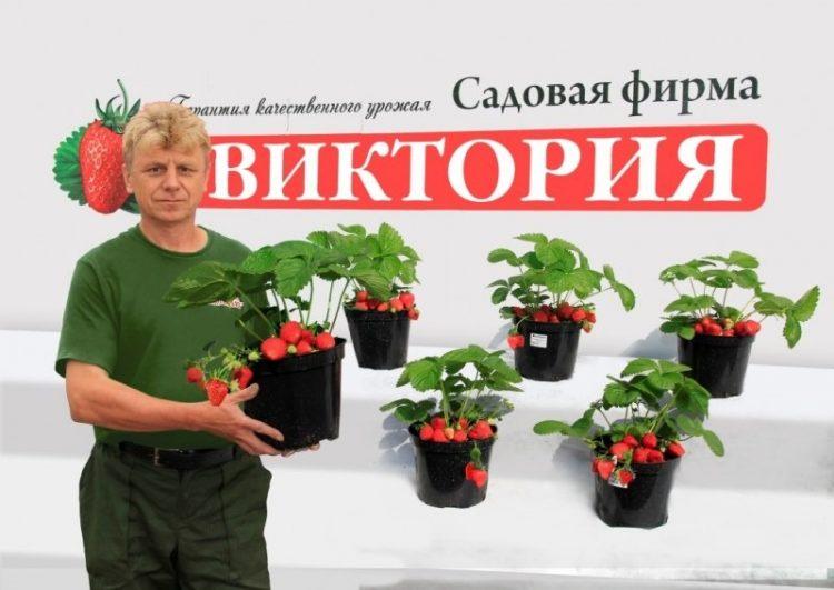 Sc-victoriya.ru — интернет-магазин садовой фирмы Виктория — отзывы