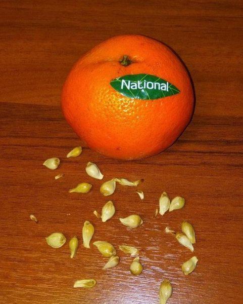 Мандарины National — отзывы