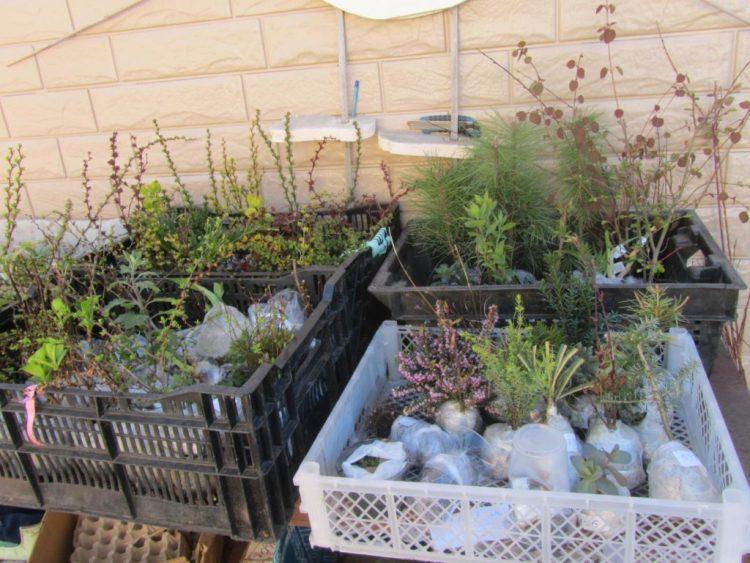 Интернет-магазин питомника растений в Тольятти Цветник-поволжья.рф — отзывы